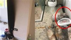 Trích gần một tháng lương mua quà cho mèo, chủ hốt hoảng khi chứng kiến 'tai nạn' xảy ra