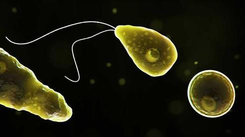 Mỹ: Xuất hiện ca tử vong đầu tiên sau khi phát hiện amip ăn não cực hiếm trong nguồn nước sinh hoạt