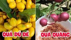 Việt Nam có 10 loại trái cây cực hiếm người biết mọc đầy ở các vùng quê, nghe tên thôi đã thấy lạ chứ nói chi ăn thử
