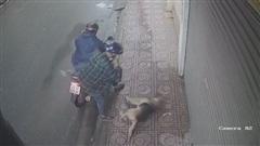 Trộm chó quá nhanh: Chủ chưa kịp nhìn, chó chưa kịp kêu