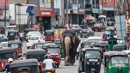24h qua ảnh: Quản tượng cưỡi voi giữa đường phố đông đúc