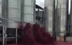 50.000 lít rượu vang đổ ra ngoài như thác, nghe lý do ai cũng xót của