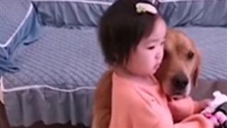 Cô chủ nhỏ bị mẹ mắng, chú chó có hành động đáng ngạc nhiên