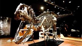Ngắm bộ xương khủng long bạo chúa 150 triệu năm tuổi, giá hơn 80 tỷ VND