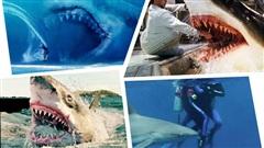 Kỷ lục người chết vì cá mập cắn suốt gần 100 năm tại Úc bị phá vỡ, lý do phía sau còn khiến chúng ta suy ngẫm nhiều hơn