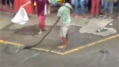 CHOÁNG: Tay không bắt trăn khổng lồ trên đường ngập lụt