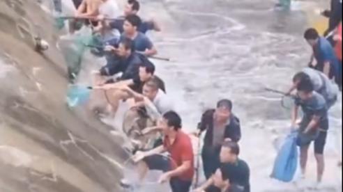 Ở một nơi mà muốn có cá ăn: Không cần bắt, chỉ cần đứng chờ... rơi