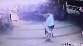 Người đàn ông dắt theo chó choáng váng vì bị mèo tấn công