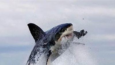 """Cận cảnh màn đi săn hải cầu của """"hung thần đại dương"""""""