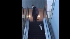 Chú mèo chạy ngược thang cuốn gây 'bão mạng' tại Trung Quốc