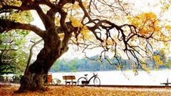 Ca khúc ngày mới: Hà Nội mùa của nỗi nhớ, dễ làm lòng ta say