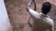 Video: Hãi hùng người đàn ông Indonesia dùng tay không bắt rắn hổ mang chúa