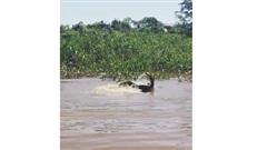 Lao xuống sông tử chiến với cá sấu, báo đốm nhận cái kết bẽ bàng