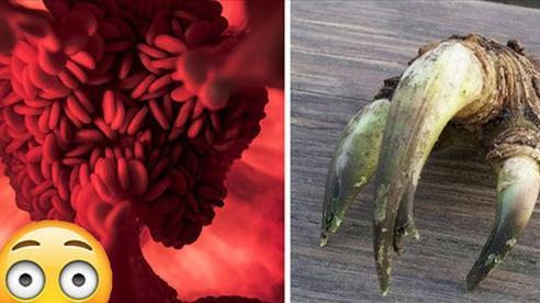 Những loại hoa quả - đồ ăn biến hóa đến kinh dị, càng nhìn càng thấy giống những thứ không nên nghĩ tới