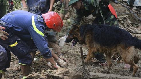 Ảnh: Hàng trăm chiến sĩ, chó nghiệp vụ dầm mưa tìm người mất tích ở Trà Leng