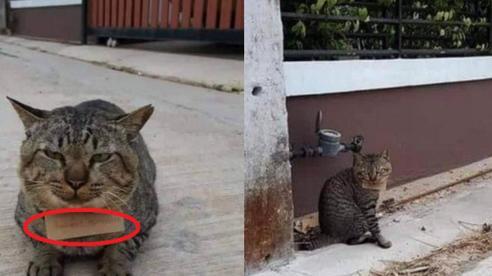 Góc 'con dại cái mang': Chú mèo bỏ nhà đi bụi 3 ngày, khi trở về mang theo món nợ khiến chủ nhân dở khóc dở cười