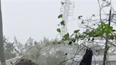 Siêu bão Goni bẻ gãy dàn đèn khổng lồ trong sân vận động ở Philippines