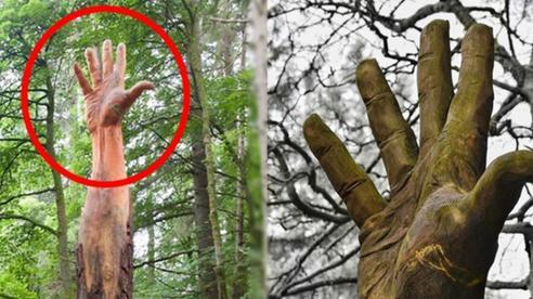 Giữa rừng cây xanh bỗng trồi lên một bài tay khổng lồ gân guốc gây kinh hãi nhưng sự thật lại khiến mọi người phải trầm trồ