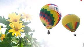 Lần đầu tiên du khách được ngắm hoa dã quỳ Ba Vì từ khinh khí cầu