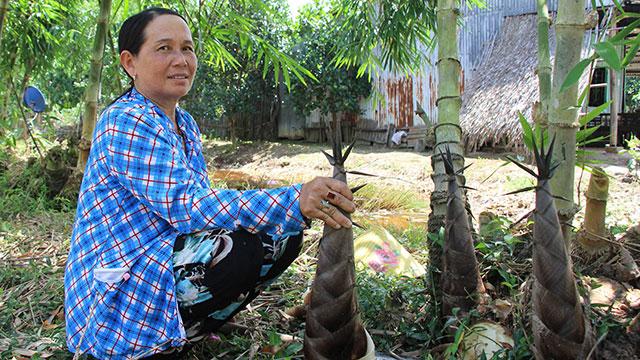 Trồng loài cây bán được tất tần tật, không bỏ đi thứ gì, ông nông dân kiếm bộn tiền