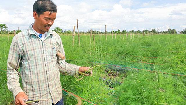 Mang tiếng khùng vì trồng thứ rau lạ mãi không được hái, đến khi bẻ mầm non bán đắt, cả làng bất ngờ