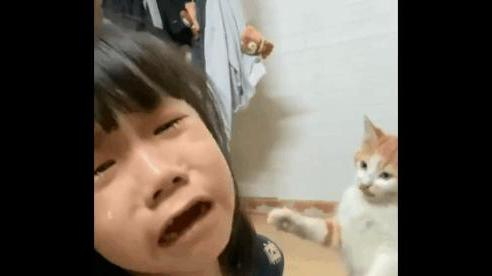 Bé gái khóc nức nở khi mẹ đòi đuổi mèo hư khỏi nhà, hứa hót phân đầy đủ khiến dân mạng bật cười