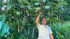 Loài cây ra thứ hoa bán đắt như vàng, trước dân đào đổ đi không hết, nay lại chăm chút trồng lại