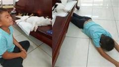 Đôi chó mèo đi triệt sản về nằm im thin thít, cậu bé tưởng 2 bạn đã chết, úp mặt xuống sàn gào khóc