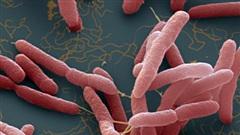 Bác sĩ bệnh viện có 4 người tử vong vì Whitmore 'giải ảo' tin đồn vi khuẩn ăn thịt người