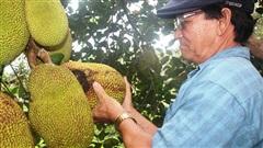 Ông nông dân này nuôi con gì, trồng cây gì mà thu 2 tỷ/năm, được Thủ tướng tặng bằng khen?