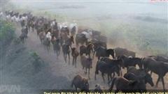 Trại ngựa đẹp như thảo nguyên Mông Cổ ở Thái Nguyên