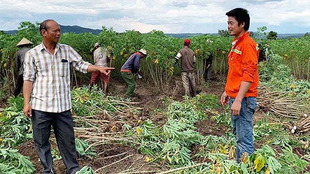 Trồng thứ cây gì mà lãi hàng trăm triệu để một ông nông dân mồ côi thành tỷ phú ở tỉnh Gia Lai?