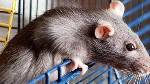 Mang chuột và cá chạch ra làm thí nghiệm, kết quả khiến nhiều người ngạc nhiên, nhận ra cách hay để thay đổi vận mệnh
