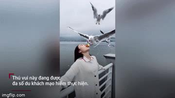 Video: Ngỡ ngàng cảnh du khách Trung Quốc cho chim mòng ăn bằng miệng