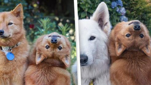 Kinh ngạc chú chó Kiko xoay đầu 180 độ khi chủ nhân nói lệnh 'quỷ'