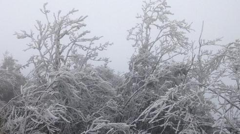 Rét đậm, rét hại sẽ bao trùm miền Bắc đến giữa tháng 1