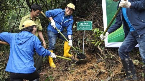 Nhiều cánh rừng được hồi sinh trong cuộc 'cách mạng' trồng rừng kiểu mới