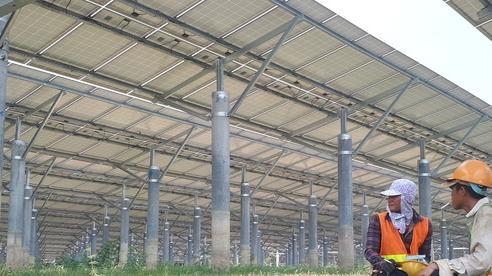 Hàng loạt dự án điện mặt trời bị phạt trên 50 tỷ đồng