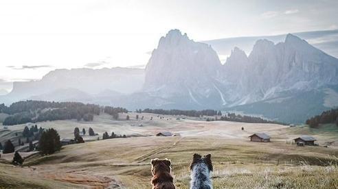 Loạt ảnh tuyệt đẹp về những chú chó và thiên nhiên