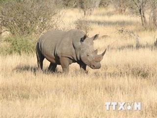 Phim 'Mai sau con lớn' mang thông điệp chấm dứt nạn săn bắt tê giác