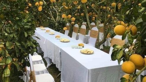 Bàn tiệc cưới bày giữa vườn trái cây ở miền Tây gây xôn xao khắp mạng xã hội, nhiều người gợi ý nên mang theo thứ đặc biệt này khi đến dự