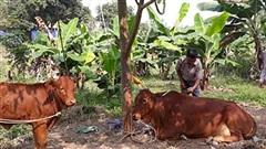 Việt Nam - hình mẫu về thành tựu xóa đói, giảm nghèo