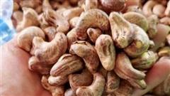 Mối nguy hiểm từ hạt điều thải loại gắn mác điều ''Bình Phước''
