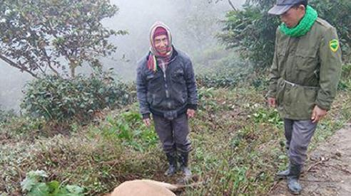 Nghệ An: Hơn 400 con trâu, bò, lợn chết vì rét