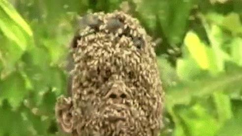 Hóa ra đây là lý do vì sao ong mật sau khi đốt người xong lại bị chết