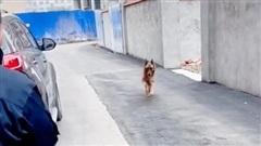 Gặp lại HLV sau nhiều năm, chú chó nghiệp vụ có phản ứng đặc biệt làm ai cũng sững sờ