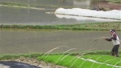 Tập trung phòng, chống rét cho cây trồng trước khả năng còn xảy ra nhiều đợt rét đậm, rét hại