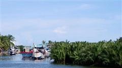 Quảng Nam rút tờ trình, không đổi rừng lấy khu đô thị
