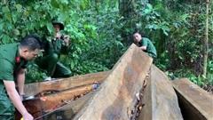 Ngược đời lâm tặc tố kiểm lâm… tiếp tay phá rừng!