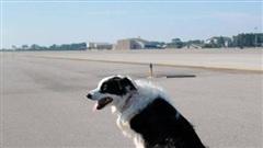 Chó 'đột nhập' sân bay ở Thanh Hóa, máy bay phải chờ hạ cánh